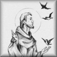 Saint Pierre d'Alcantara